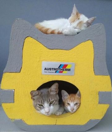 austrotherm kedi evi 02
