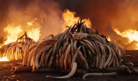 Anthropocene The Human Epoch'den bir kare